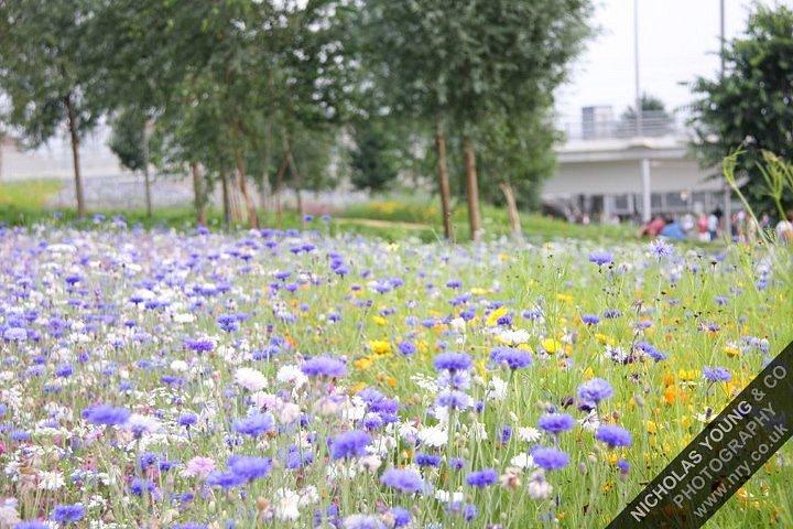 olympic-wild-flowers.jpg