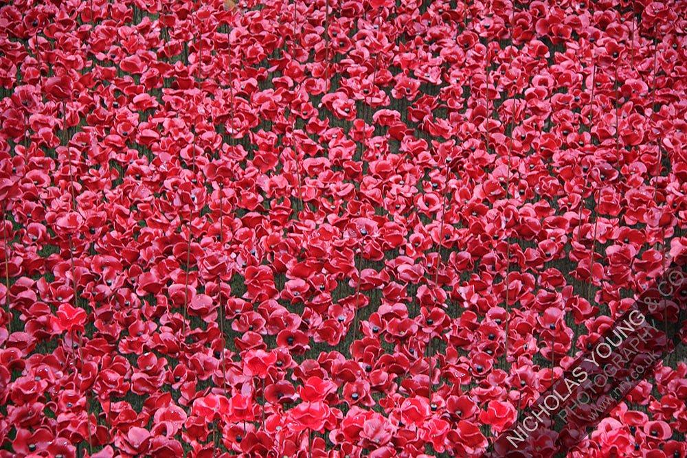 tower-of-london-poppies-2.jpg