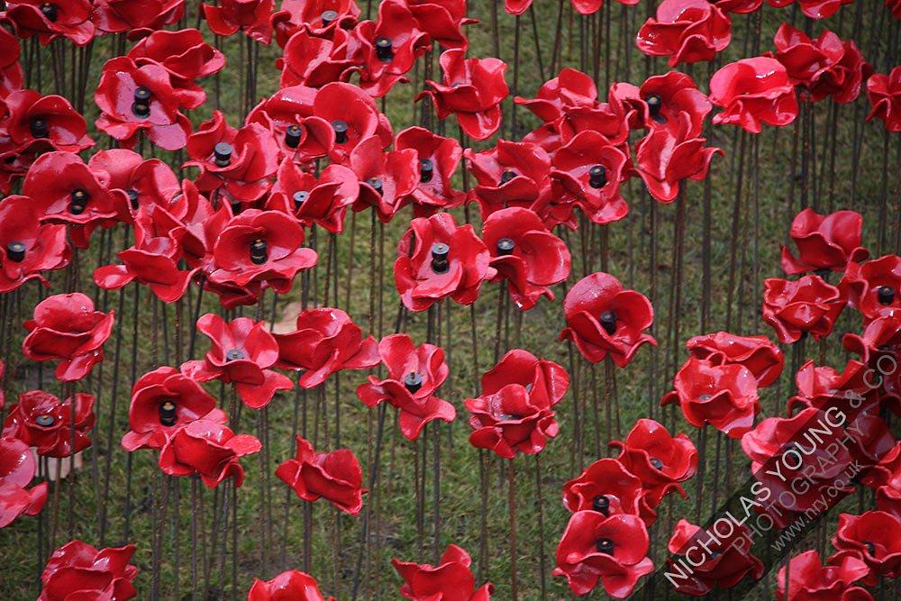 tower-of-london-poppies.jpg