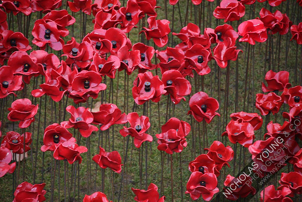 tower-of-london-poppies.jpg