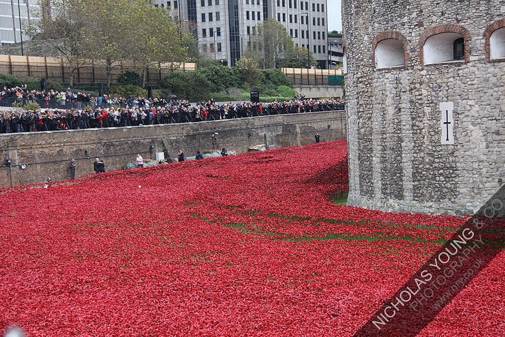 tower-of-london-poppies-3.jpg
